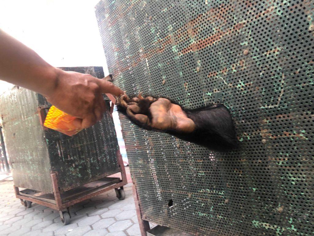 i quattro orsi salvati dall'Hanoi Central Circus e ora liberi alla riserva di tam dao di Animals Asia